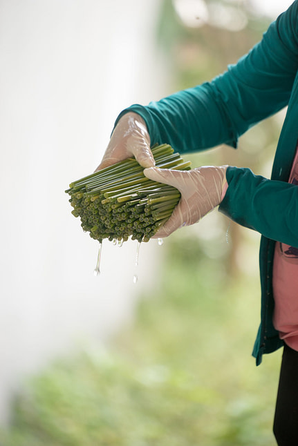 Making grass straws - rinse and disinfect