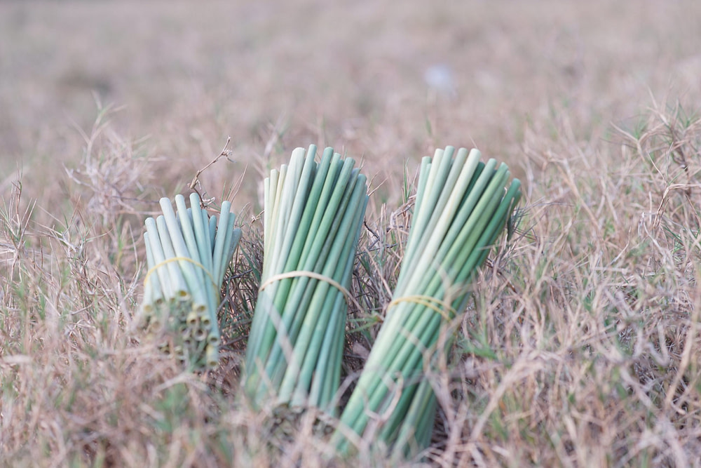 Grass Drinking Straws